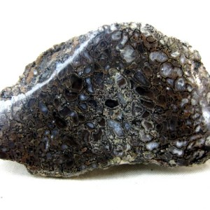 Fossil Jurassic Age Polished Dinosaur Bone from the Morrison Formation of Colorado