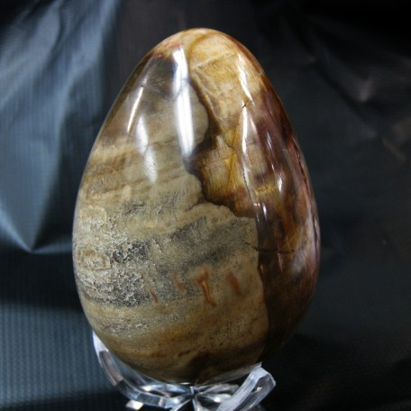 Petrified Wood Polished Egg