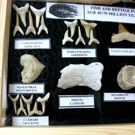 North Africa Fish & Reptile Fossil Frames 1a