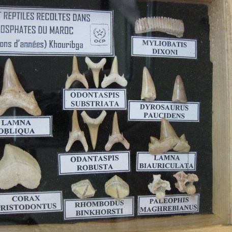 North Africa Fish & Reptile Fossil Frames 8b