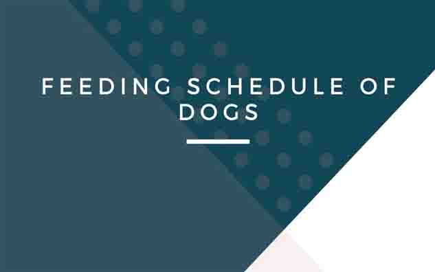 Feeding schedule of dogs