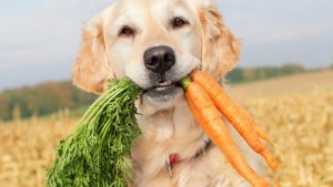 Can Dogs Eat Carrots – Detailed explanation