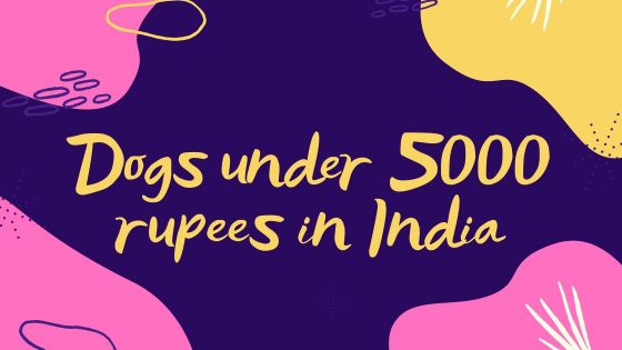 Dogs under 5000 rupees in India