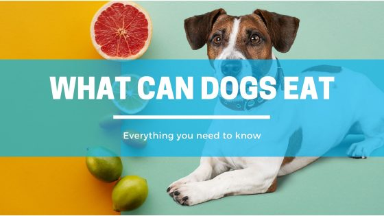 Can Dogs Eat