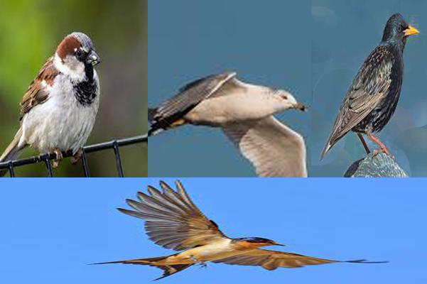 S50 billion birds; six Birds For Every Human on the Earth