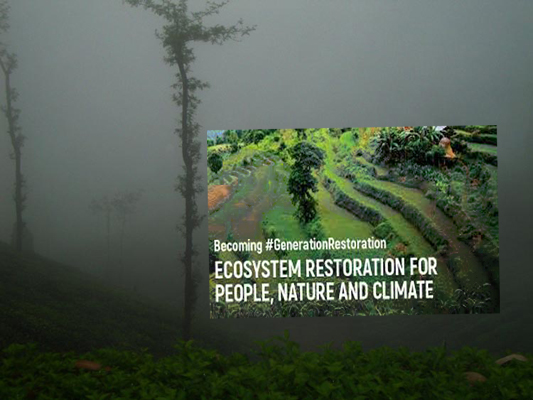 Restore 1 Billion Hectares of Land For a Healthy Planet