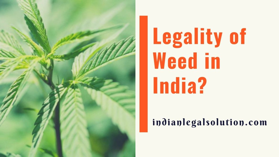 Legality of Weed in India?