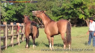 Animal Sex Girl Sex With Animals Girl sex with horse Ful HD Porn (1)