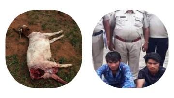 गर्भवती बकरी का ग्रुप में बलात्कार करा और मार डाला 8 मजहबी समुदाय के लोगो