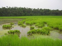 Kerala Tourism Photos 99