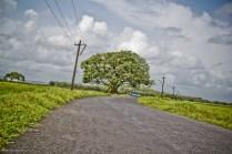 Places To Visit In Goa Divar Island