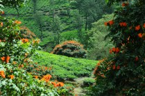 Munnar Tourist Places Pictures 13 67
