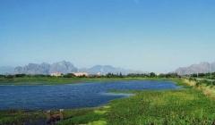 davidson_wetland_ecosystem_01
