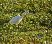 davidson_birdwatching_2013-1