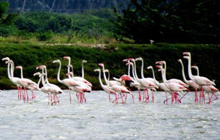 flamingo-davidson-2020-02