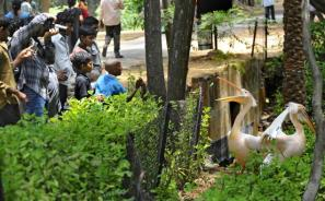 Inside At Indira Gandhi Zoological Park Vishakhapatnam
