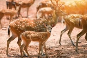 deer park - Kawal Tiger Reserve