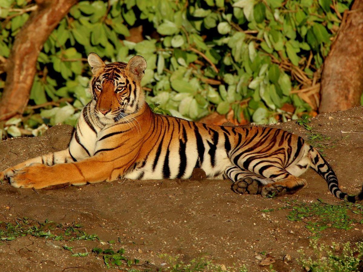 Bandipur Tiger Reserve, Karnataka, India