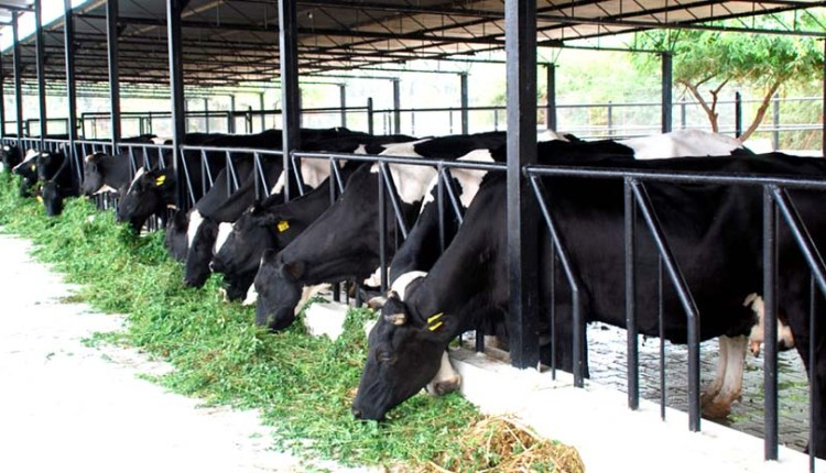 Dairy-Farming-in-India
