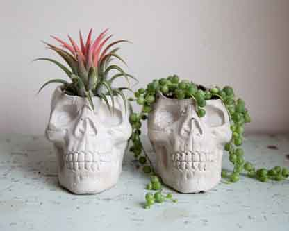 Skull Planter Brooklyn Global