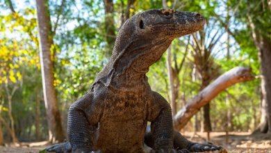 Benarkah akan dibangun Jurassic Park di Pulau Rinca yang akan mengganggu Komodo? (Photo by Dimitri Dim from Pexels)
