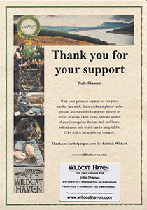 Wild Cat 'thank you for your support'