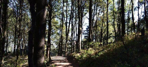 Binsar Forest