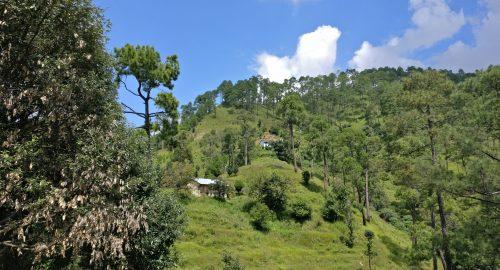 Kumaon - Binsar trip Dalar village homestay experience