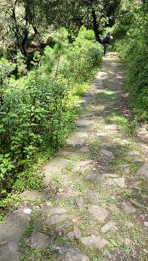 Trail leading to Dalar Village - Binsar