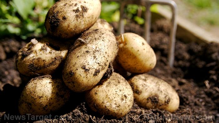Zijn aardappelen gezond? Dit is de echte score