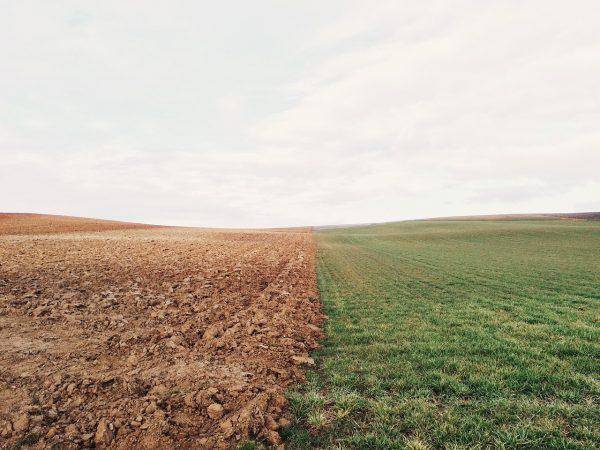 Volgens de federale overheid in de VS was dit jaar 19 miljoen hectare landbouwgrond niet beplant met gewassen