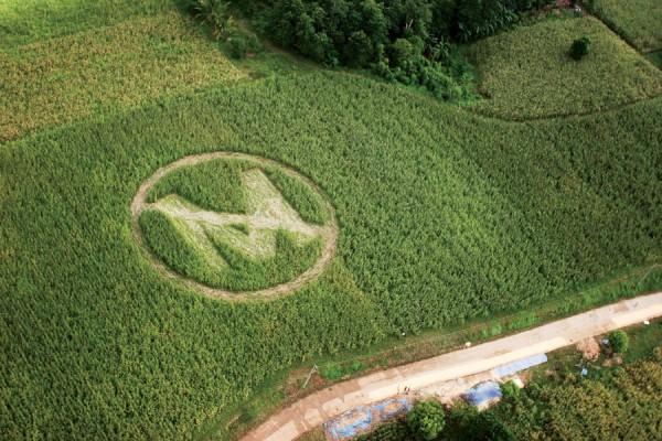 Bevestigd Monsanto Is Een Crimineel Bedrijf Dat Willens En