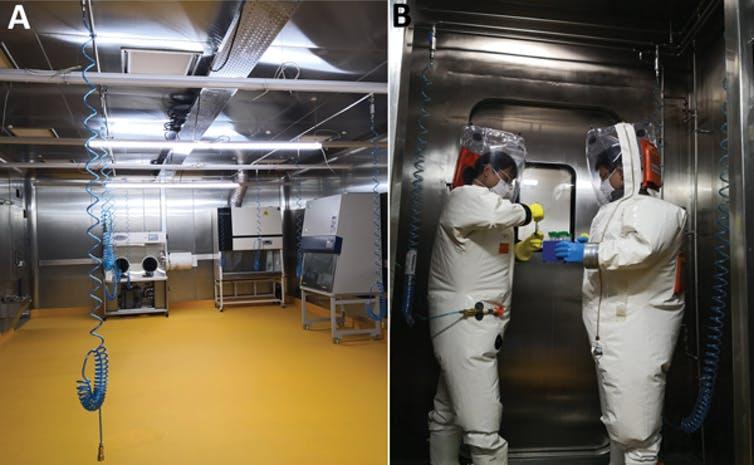 Niets bewijst dat het coronavirus in het laboratorium is gemaakt: de onderkant van de infidemie op de  Covid-19