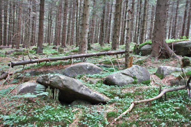 Harz, Achtermann, Wanderung, Blaubeeren, Nationalpark Harz, Natur
