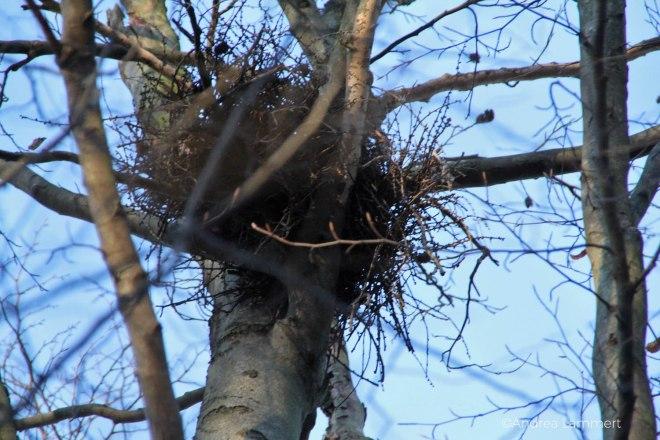 Tierspuren finden, Nest im Baum