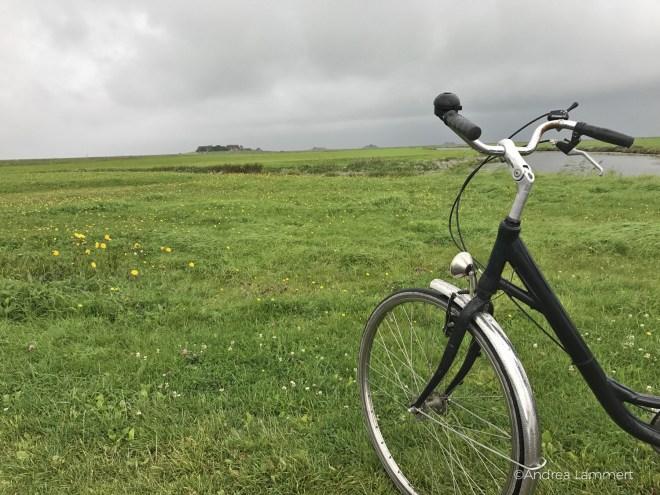 Mit dem Fahrrad auf der Hallig Hooge