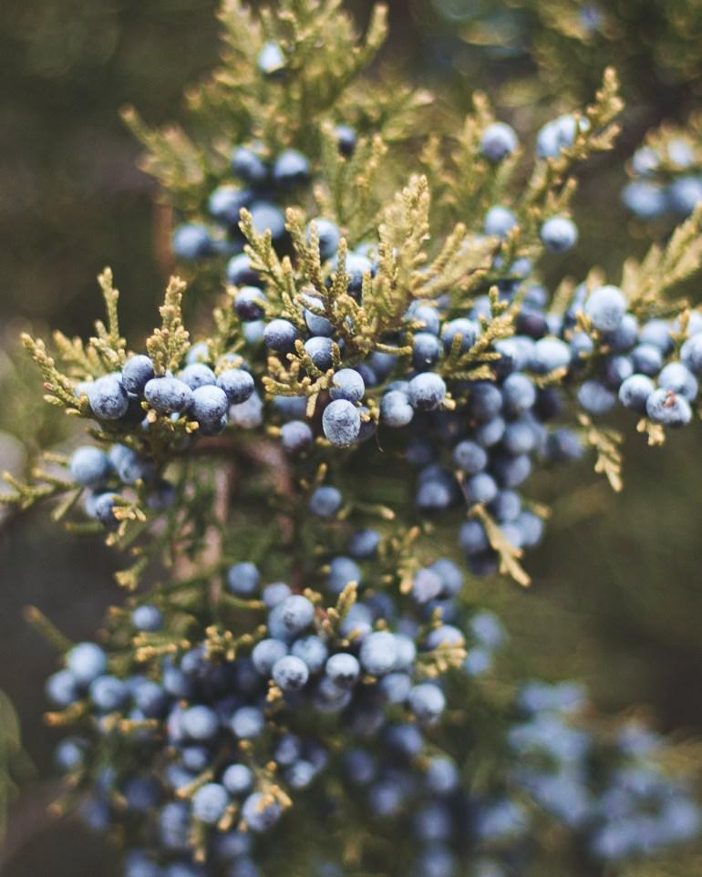 Berries 2 4x5