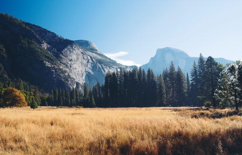 Sentinel Meadow