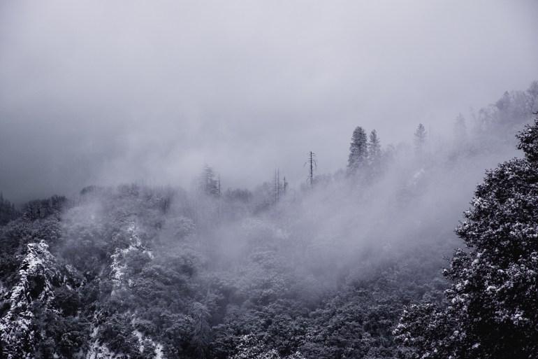 Sequoias-17