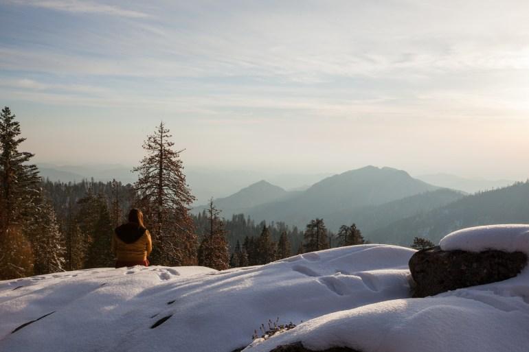 Sequoias-75