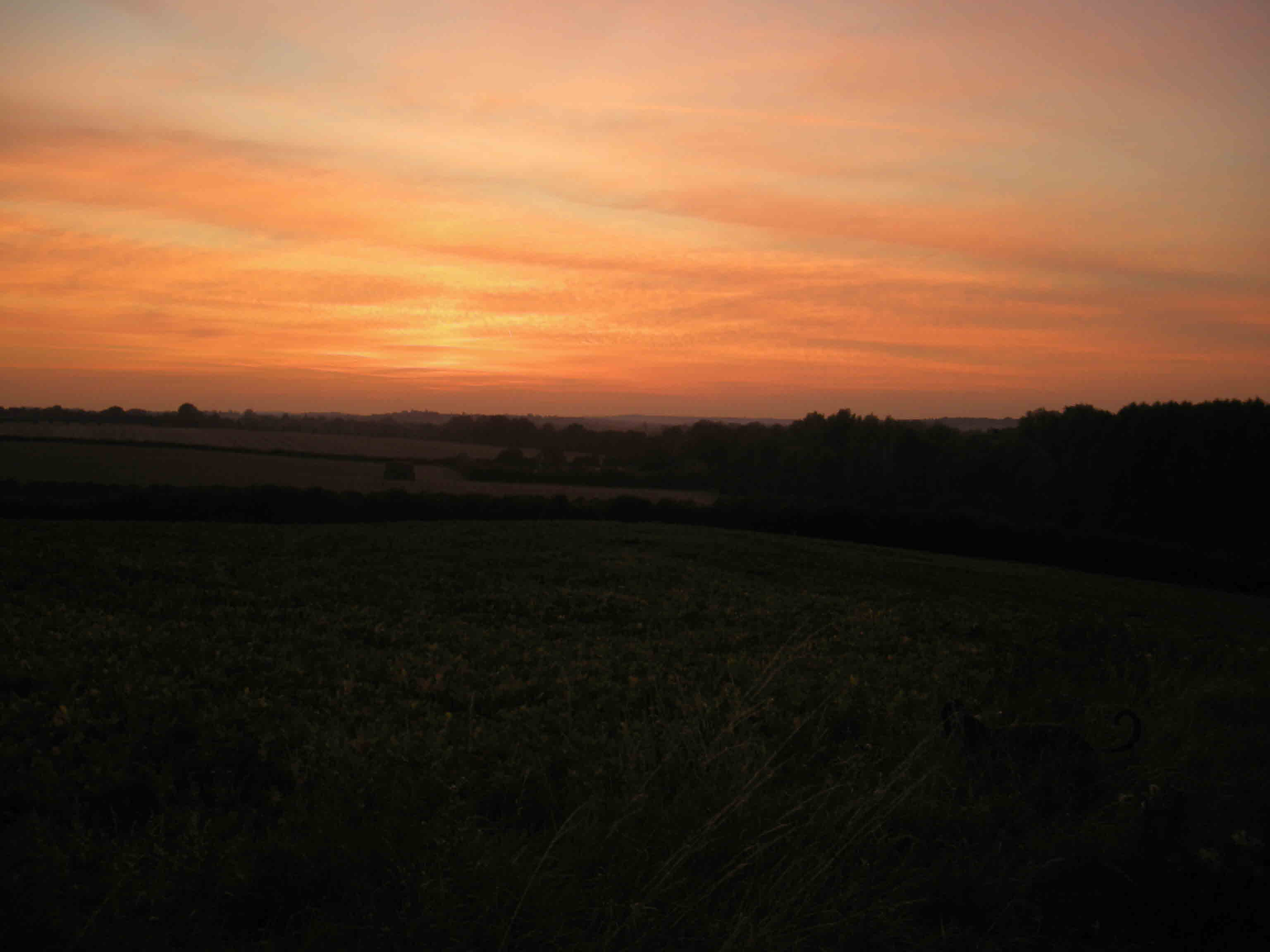 Sunset over the straw