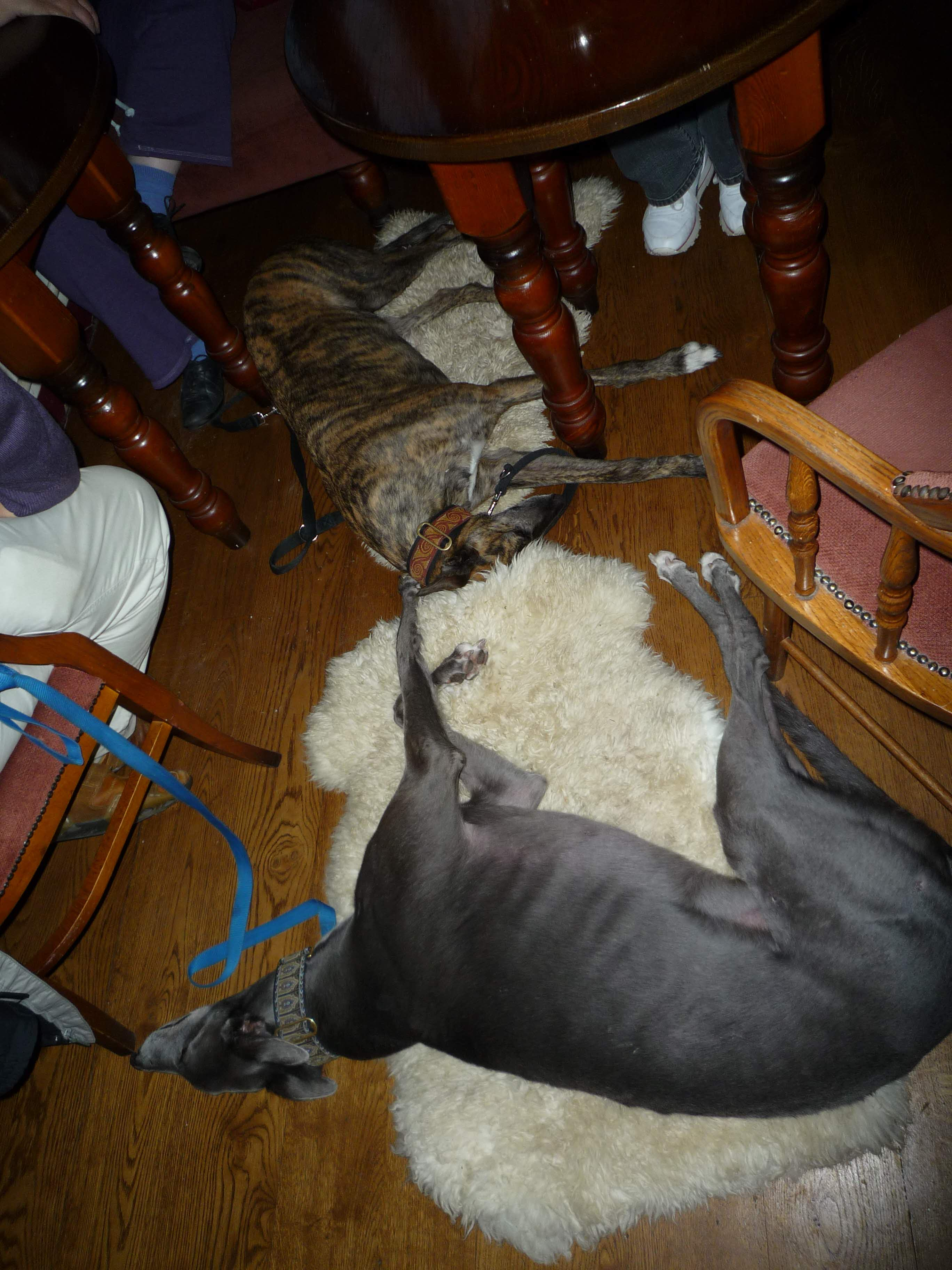 Blue and Lou at the Leigh Inn - it's been a busy day...