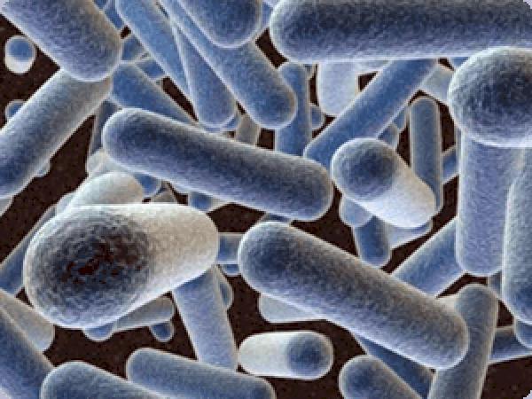 lactobacillus-gasseri.jpg