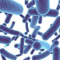 Bifidobacterium-Infantis_660_X_495_px