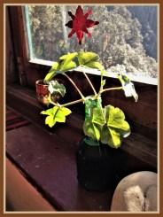 plant-5b