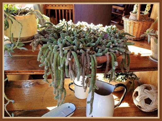 succulent-1b