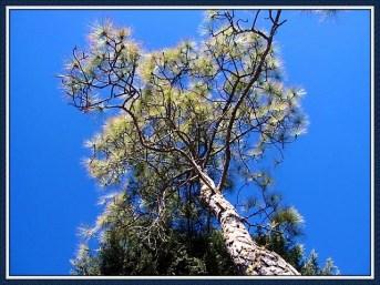 tree-5b