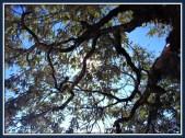 tree-8b