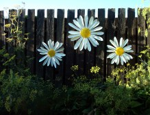 large hanging daisy heads, memorial piece for each sibling - 2' W