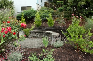 climbing rose trellis creates a private nook in the front yard - SW Portland 10' W x 6.5' H